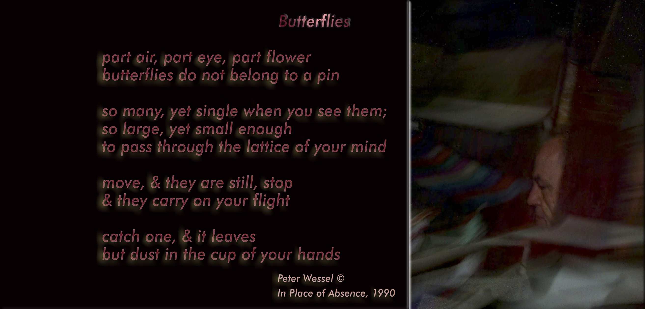 butterflies-wide-version